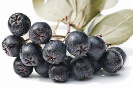 aronia bitkisi fidanı, aronia meyvesi faydaları