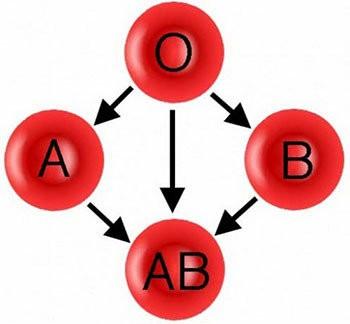 hangi kan grubu kime kan verebilir