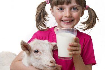 keçi sütü faydaları, bebeklere verilir mi, keçi sütü sabunu