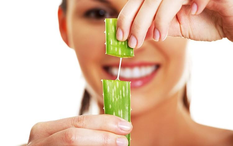 aloe vera bitkisi faydaları nelerdir, aloe vera nasıl kullanılır
